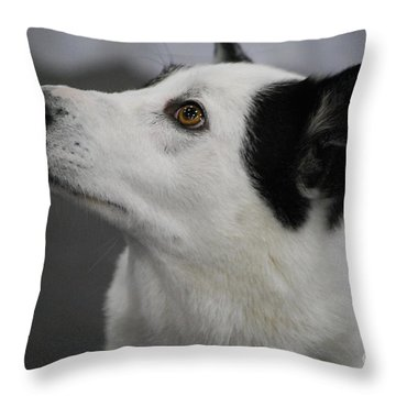 Canaan Dog Throw Pillow
