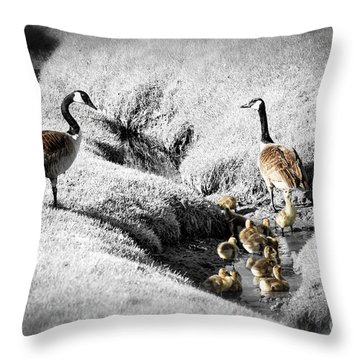 Canada Geese Family Throw Pillow by Elena Elisseeva