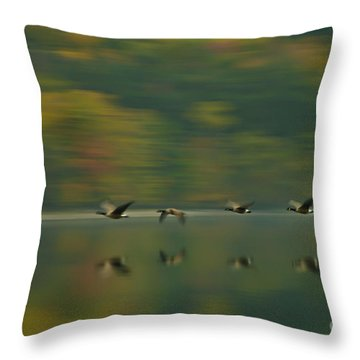 Canada Geese Whoosh Throw Pillow by Steve Clough