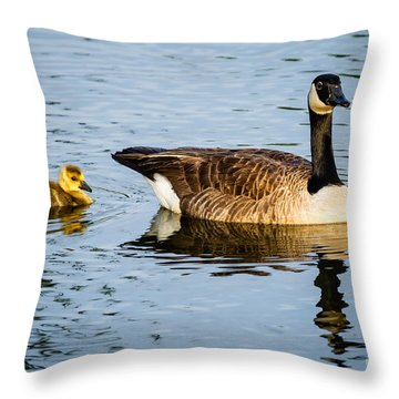 Canada Goose And Gosling Throw Pillow by Dawna  Moore Photography