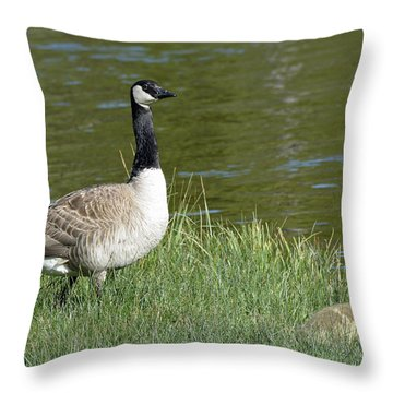 Canada Goose Mom With Goslings Throw Pillow by Bruce Gourley