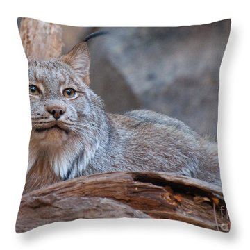 Throw Pillow featuring the photograph Canada Lynx by Bianca Nadeau