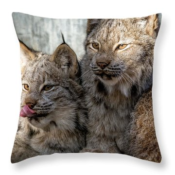 Canada Lynx Throw Pillow by Michael Hubley