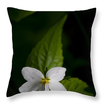 Canada Violet Throw Pillow by Melinda Fawver