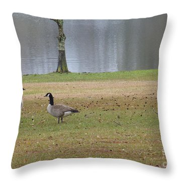 Canadian Geese Tourists Throw Pillow