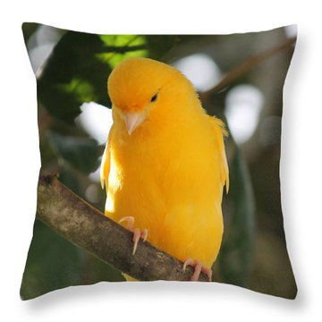 Canary Yellow Beauty Throw Pillow