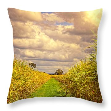 Throw Pillow featuring the photograph Cane Fields by Wallaroo Images