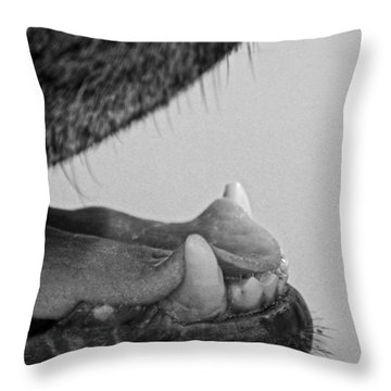 Throw Pillow featuring the photograph Canine Joy by Carolina Liechtenstein