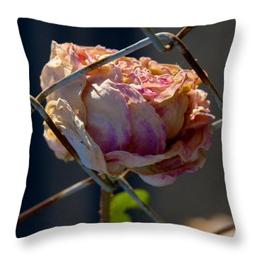 Throw Pillow featuring the photograph Can't Fence Me In - Faded Rose Art Print by Jane Eleanor Nicholas