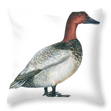 Canvasback Duck  Throw Pillow by Anonymous