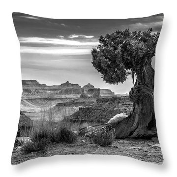 Canyon And Twisted Pine Throw Pillow