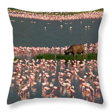 Cape Buffalo And Lesser Flamingos Throw Pillow by Panoramic Images