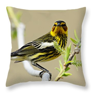 Cape May Warbler Throw Pillow by Larry Ricker