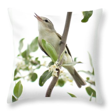 Throw Pillow featuring the photograph Captivating Vireo by Anita Oakley