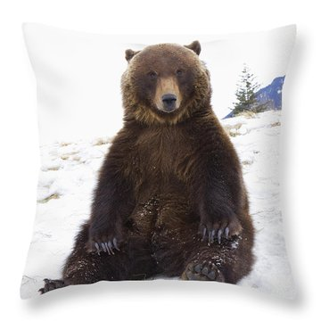 Captive Grizzly During Winter Sits Throw Pillow by Doug Lindstrand