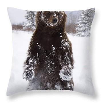 Captive Grizzly Stands On Hind Feet Throw Pillow by Doug Lindstrand