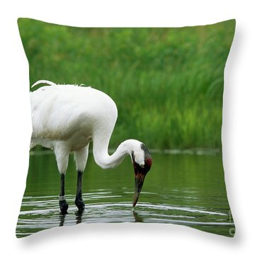 Captive Whooping Crane Feeding Throw Pillow