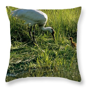 Captive Whooping Crane With Chick Throw Pillow