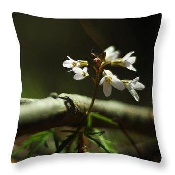 Cardamine Concatenata Cutleaf Toothwort Throw Pillow by Rebecca Sherman