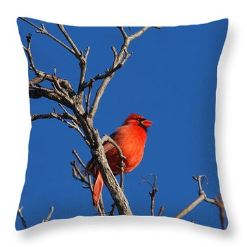 Cardinal And Blue Throw Pillow by Janice Adomeit