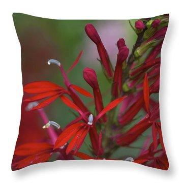 Cardinal Flower Throw Pillow by Jane Eleanor Nicholas