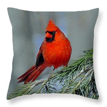 Cardinal In An Evergreen Throw Pillow