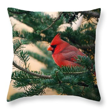Cardinal In Balsam Throw Pillow