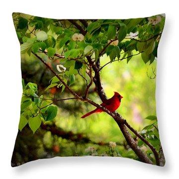 Cardinal In Dogwood Throw Pillow