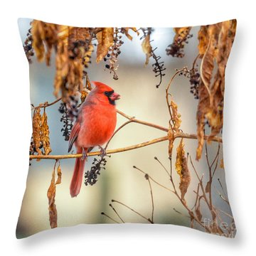 Cardinal In The Pokeberries Throw Pillow by Kerri Farley