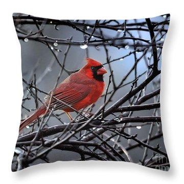 Cardinal In The Rain   Throw Pillow by Nava Thompson