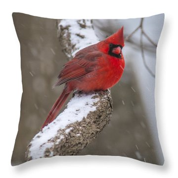 Cardinal In The Snow Throw Pillow