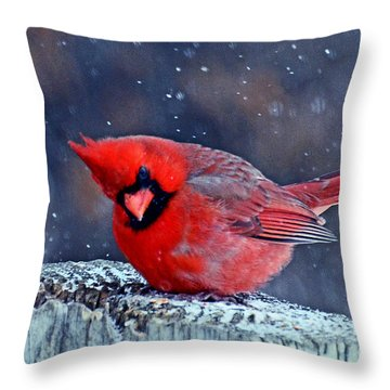 Throw Pillow featuring the photograph Cardinal In The Snow by Rodney Campbell