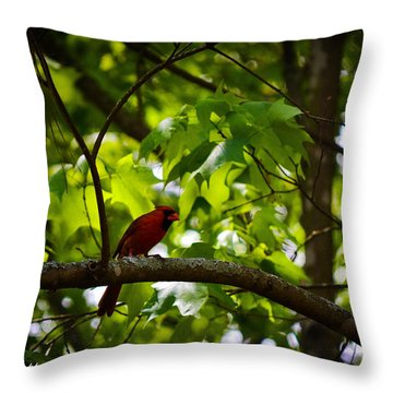 Cardinal In The Trees Throw Pillow by Tara Potts