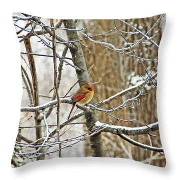 Cardinal In Winter Throw Pillow by Aimee L Maher Photography and Art Visit ALMGallerydotcom