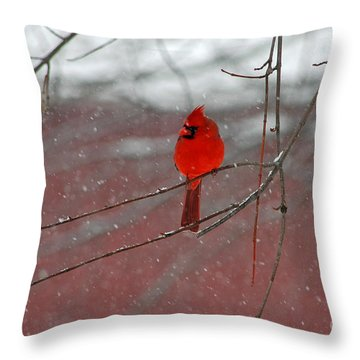 Throw Pillow featuring the photograph Cardinal In Winter by Olivia Hardwicke