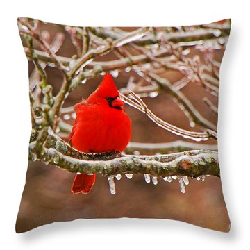 Cardinal Throw Pillow by Mary Carol Story