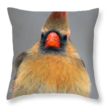 Cardinal Mugshot Throw Pillow