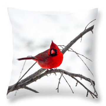 Cardinal On A Branch  Throw Pillow by Mary Carol Story
