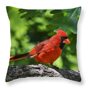 Cardinal Red Throw Pillow by Christina Rollo