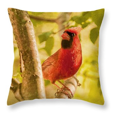 Cardinal Rules Throw Pillow by Lois Bryan