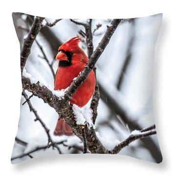 Cardinal Snow Scene Throw Pillow