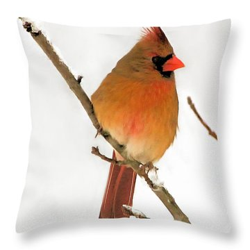 Cardinal Winter Throw Pillow by Marion Johnson