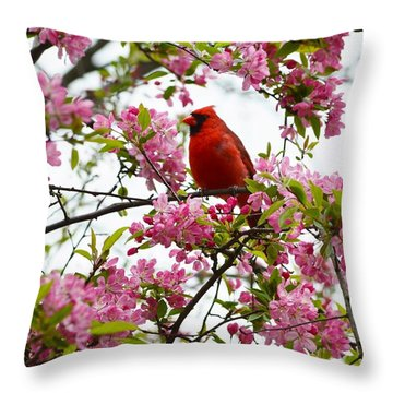 Cardinally Beautiful Throw Pillow