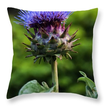 Cardoon Throw Pillow