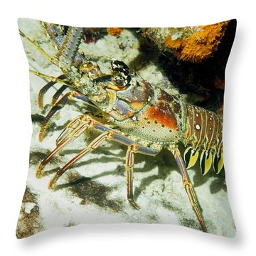 Caribbean Spiny Reef Lobster  Throw Pillow by Amy McDaniel