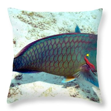 Throw Pillow featuring the photograph Caribbean Stoplight Parrot Fish In Rainbow Colors by Amy McDaniel