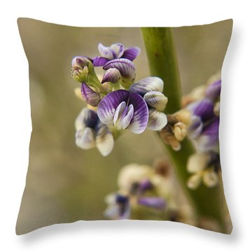 Carmichaelia Petriei Throw Pillow