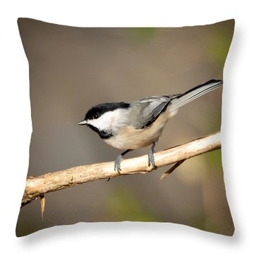Throw Pillow featuring the photograph Carolina Chickadee  by Kerri Farley