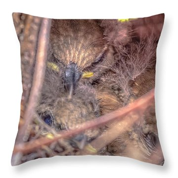 Throw Pillow featuring the photograph Carolina Wren Nest by Rob Sellers