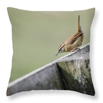 Carolina Wren Two Throw Pillow by Heather Applegate